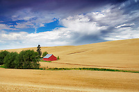 Wheat field and barn. The Palouse. Washington