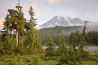 Early morning mist and sunrise at Reflection Lake, Mt Rainier NP
