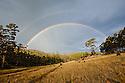 Double rainbow over forest. Tasmania. Australia.