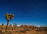 An isolated spot in Joshua Tree National Park, California in the night hours where all you can hear is the sound of crickets.