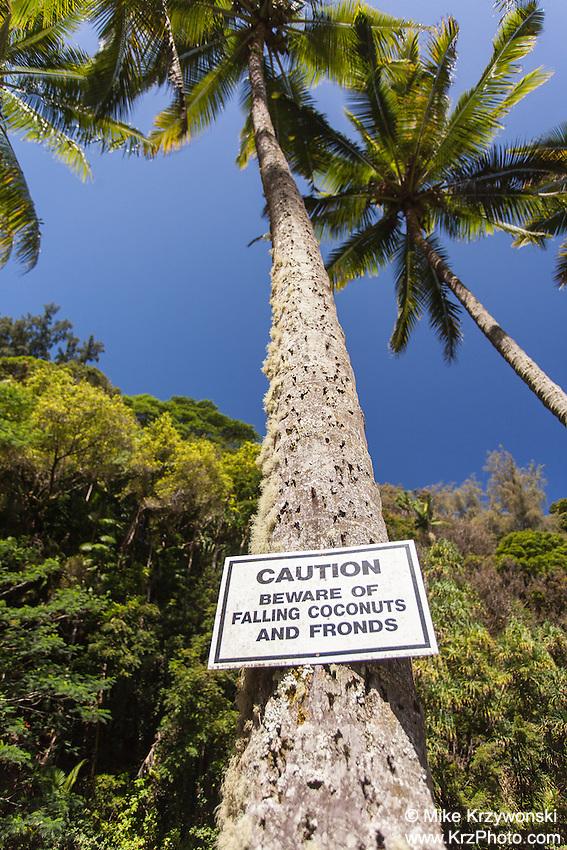 Caution sign warning of falling coconuts in Kolekole Beach Park, Honomu, Big Island, Hawaii