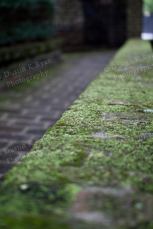 Moss Covered brick pathway