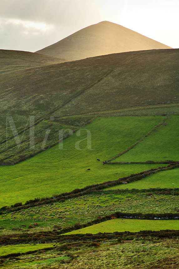 Green pastures below Cruach Mhárthain, Dingle Peninsula, County Kerry, Republic of Ireland