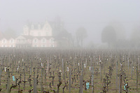 vineyard fog ch gd barrail lamarzelle figeac saint emilion bordeaux france