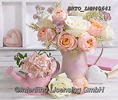 Alfredo, FLOWERS, BLUMEN, FLORES, photos+++++,BRTOLMN40641,#f#, EVERYDAY