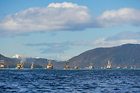 Commercial fishing vessels, Cape purse seiners depart Sitka Channel, into Sitka Sound for the for the first Herring Sac Roe fishery opener in 2006, southeast, Alaska