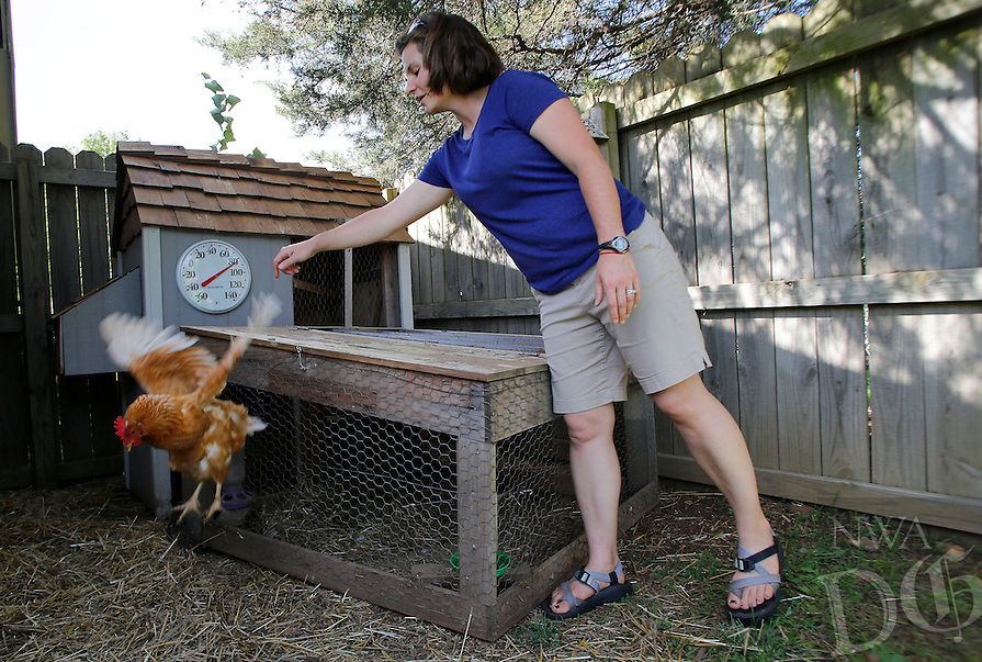 NWA Media/DAVID GOTTSCHALK - 6/16/14 - Henrietta, 1, a female laying chicken, jumps off of the chicken coup in the backyard of Dana Smith Monday June 16, 2014 in Fayetteville. Smith is the administrator of F.L.O.C.K, the Fayetteville League of Chicken Keepers, an online advocacy  group helping chicken owners inside the Fayetteville city limits.