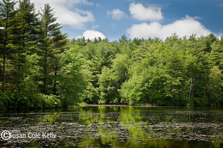 A quiet pond on a summer day at Arcadia Management Area, Exeter, RI, USA