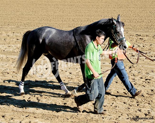 Lazur Hess before The Delaware Arabian Juvenile Championship at Delaware Park on 9/27/14