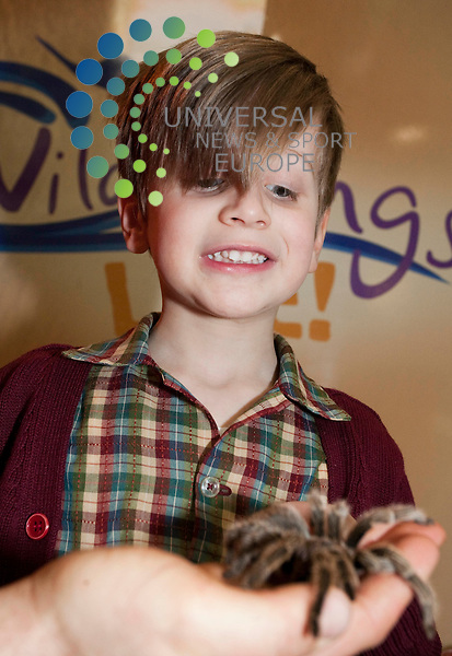 Wildlife roadshow to arrive in Scotland, at Buchanan Galleries Glasgow, Hugo Peterson (4) from bishopbriggs, with spider  . Picture Credit / Johnny Mclauchlan/Universal News and Sport, Scotland/07/04/10....