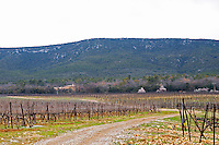 View over the vineyard at Domaine de Triennes Cordon Royat training Domaine de Triennes Nans-les-Pins Var Cote d'Azur France