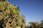Israel, Judean desert. Cacti in Kibbutz Ein Gedi by the Dead Sea