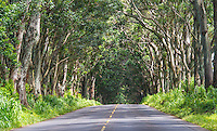 The Tunnel of Trees Maluhia Road in Kaui Hawaii