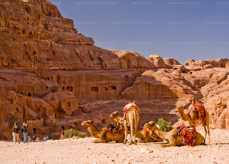 Home caves in Petra, Jordan.  A group of camels awaits riders, overlooking a number of carved tombs and lodging caves in the rock walls of Petra.  © Rick Collier