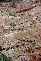 Hikers and mule teams heading up the steep switchbacks of the South Kaibab Trail in the Grand Canyon.