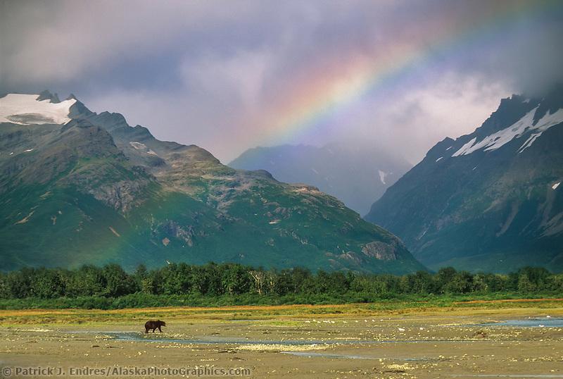 Coastal brown bear, tidal flats, Coastal Katmai, Alaska peninsula, Alaska