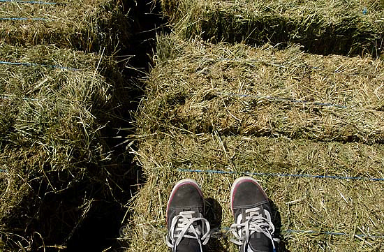 trent feet; 7.07.2005<br />
