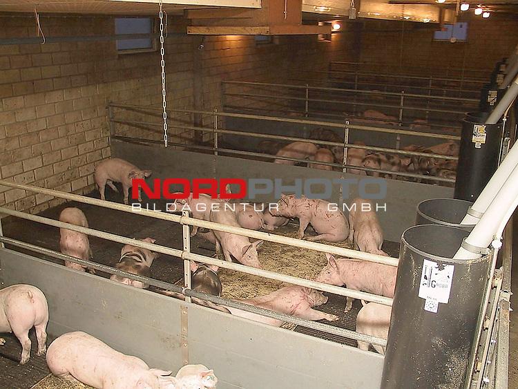 Landkreis Vechta, DEU, 21.03.2001<br /> <br /> Aufzuchtbetrieb fuer Schweine im Landkreis Vechta<br /> Boxenhaltung von Schweinen<br /> <br /> Foto &copy; nordphoto - <br />  *** Local Caption *** [Foto &copy; nordphoto -  Foto ist honorarpflichtig! zzgl. gesetzl. MwSt.<br />  Belegexemplar erforderlich<br /> http://www.nordphoto.de / info @ nordphoto.de]