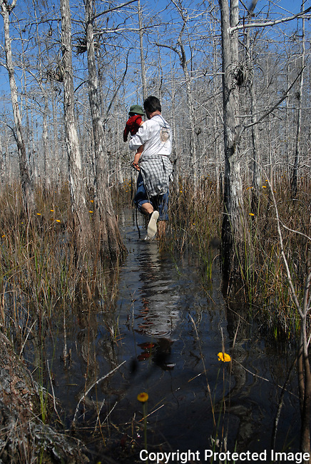 man wades through a stand of bald cypress trees, while holding his small child, in Everglades National Park.  A couple of yellow everglades daisy in front
