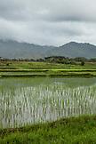 PHILIPPINES, Palawan, Puerto Princesa, Iwahig Prison Penal Farm