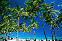 Dominican Republic, Punta Cana, Bavaro Beach. Palm trees and beach
