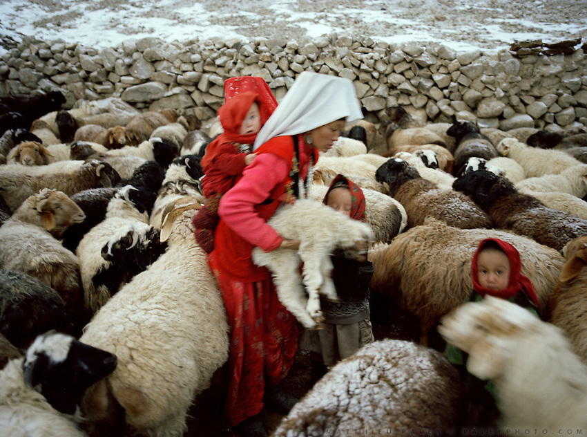 "Looking for the lamb in a sheep herd in the evening. Wolf attack on livestock is common..Campment of the ""second"" Sary Tash. Ustad's Ghulam's camp..Winter expedition through the Wakhan Corridor and into the Afghan Pamir mountains, to document the life of the Afghan Kyrgyz tribe. January/February 2008. Afghanistan"
