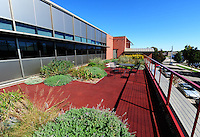 A rain garden tops the terrace of Madison's Engineering Services Building. The rain is used by plants, rather than running off the roof and into the city sewer.