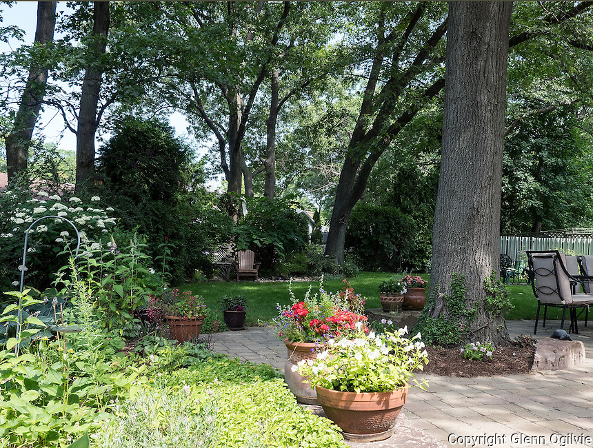 "Allan McKeown<br /> 1446 Sylvan Court<br /> Amckeown1@cogeco.ca<br /> <br /> Split Personality Garden!<br /> Hot and sunny in front – cool oasis at back.<br /> <br /> Back garden is a cool oasis under a canopy of mature oaks, creating a pleasing view from the patio:<br /> Mostly perennials and native plants<br /> 8 types of hydrangea and sedum, hostas, campanulas, rubeckia, coreopsis<br /> Trees; oaks, cedars, red bud<br /> The bubbling rock feature attracts many birds and provides an endless source of entertainment!<br /> <br /> Front: bright white flowered oak hydrangeas, hostas, hardy geranium, coral bells, brunnera, sedum, Japanese fountain grass, some Native plants and mix of shrubs<br /> Trees; oaks, magnolia, Saskatoon berry, Japanese maple, cedars.<br /> <br /> The abundance of oak trees in the neighbourhood create a feeling of living in a small forest, the garden being a ""forest floor"" of diversity and colour!"