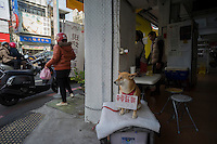 "A dog helps its owner to sell pancakes in Tainan, Taiwan, 2015. Tainan, literally ""Taiwan South"", is a special municipality located in southern Taiwan, facing the Taiwan Strait in the west and south. Tainan is the oldest city in Taiwan and also commonly known as the ""Capital City"" for its over 200 years of history as the capital of Taiwan under Koxinga and later Qing dynasty rule. Tainan's complex history of comebacks, redefinitions and renewals inspired its popular nickname ""the Phoenix City""."