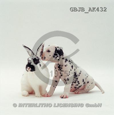 Kim, ANIMALS, fondless, photos(GBJBAK432,#A#) Tiere ohne Fond, animales sind fondo