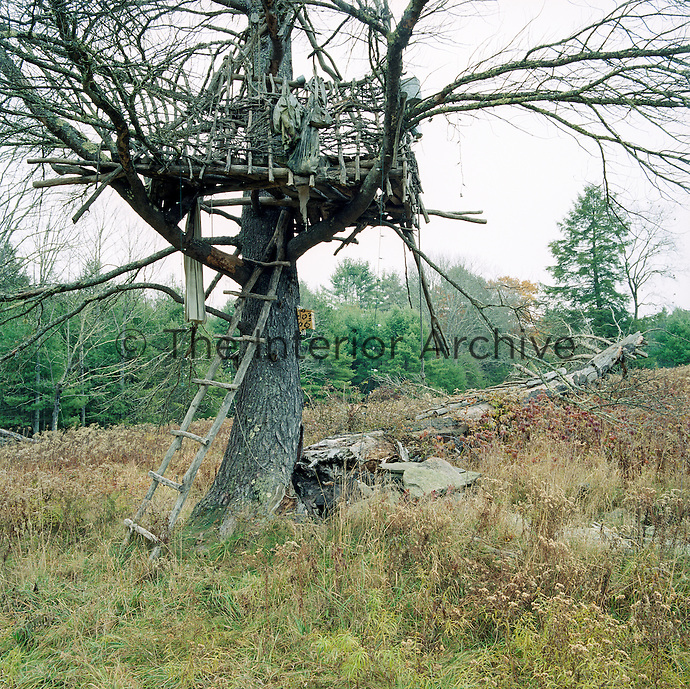 A rustic wooden ladder leads up to a dilapidated tree house/platform