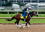 LOUISVILLE, KENTUCKY - APRIL 30: Haikal, trained by Kiaran McLaughlin, exercises in preparation for the Kentucky Derby exercises in preparation for the Kentucky Oaks  Scott Serio/Eclipse Sportswire/CSM