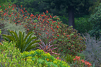 Berkeley Botanical Garden