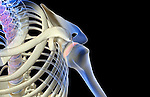 A superior anterolateral (left side) view of the shoulder. Royalty Free