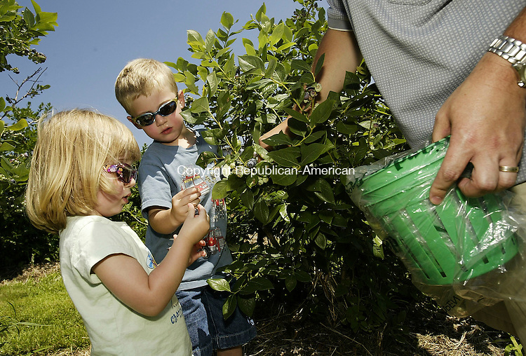BETHLEHEM, CT 10 July 2005 -071005BZ10- From left- Sidney Baron (CQ), 2, her brother Jordan Baron, 5, and their father Rich Baron, all of Woodbury, pick blueberries at March Farms during a Blueberry Festival Sunday afternoon. <br /> Jamison C. Bazinet Photo