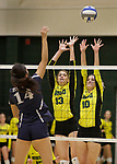 SPEARFISH, SD: SEPTEMBER 29:  Janice Jin #14 of Colorado Mines hits over Cheyenne Palu #13 and Ellise Lech #10 of Black Hills State during their college volleyball match Friday at the Donald E. Young Center in Spearfish, S.D.   (Photo by Dick Carlson/Inertia)