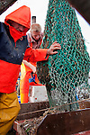 Peter jumps round a net loaded with small shrimp and fish from the seabed.