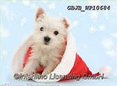 Kim, CHRISTMAS ANIMALS, WEIHNACHTEN TIERE, NAVIDAD ANIMALES, fondless, photos+++++,GBJBWP10684,#xa#