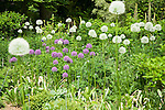 Globes of purple and white alliums mix with other perennials waiting to start, including flox, delphiniums, loosestrife, and poppies in this mixed border bathed in spring sunshine at the Dunn Gardens, a former private estate near Seattle now run as a woodland botanical garden and available for touring by appointment and fee.