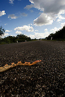 A dead snake on the road. On the Mezcal Route between Zacatecas and San Luis Potosi.