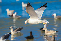 Gaviotas Seagulls