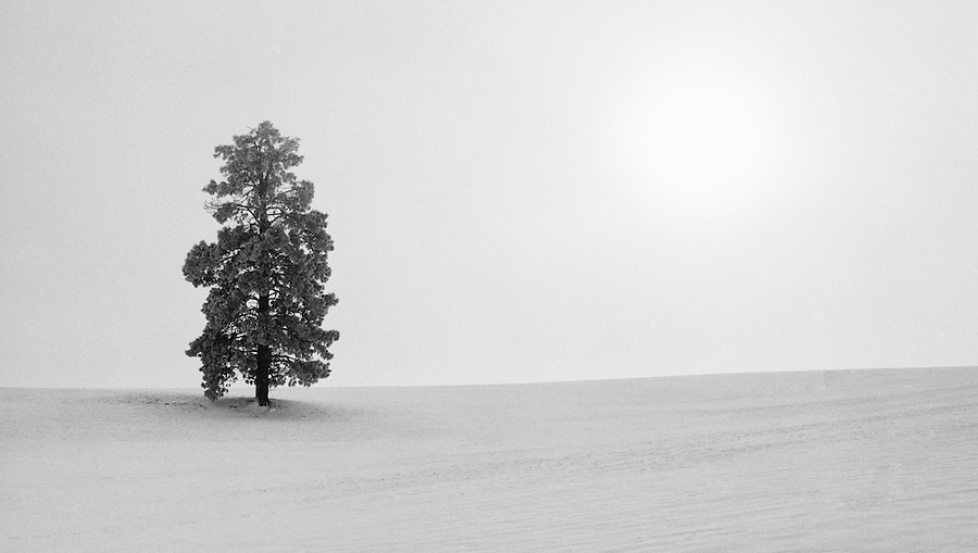 A single tree stands against a field of snow while the sun shines brightly through the fog.