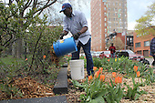 Members of the Hyde Park Garden Fair came out Tuesday afternoon to plant flowers on 54th Street between Blackstone and Harper.