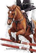 Marcello, REALISTIC ANIMALS, REALISTISCHE TIERE, ANIMALES REALISTICOS, paintings+++++,ITMCEDC1072,#A# ,horse,rider,horsemen