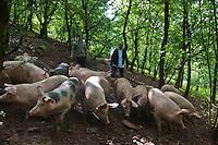 Europe/France/Aquitaine/64/Pyrénées-Atlantiques/Pays-Basque/Saint-Étienne-de-Baïgorry: Enaut Larre, et Eric Ospital, Enaut Larre élève  pour Eric Ospital charcutier à Hasparren des cochons Ibaïona plein air à la  Ferme Belarrea