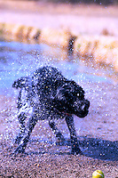 Dog shaking off water after fetching a ball from a pond.