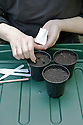 Sowing melon seeds 2 of 4. Sow seeds into damp potting compost at a depth of about 1cm (1/2in), two or three to a pot.