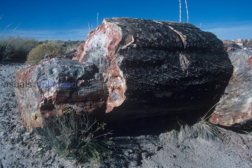 Petrified tree, Triassic Period, 200 m.y.a., Petrified Forest National Park, Arizona, USA.