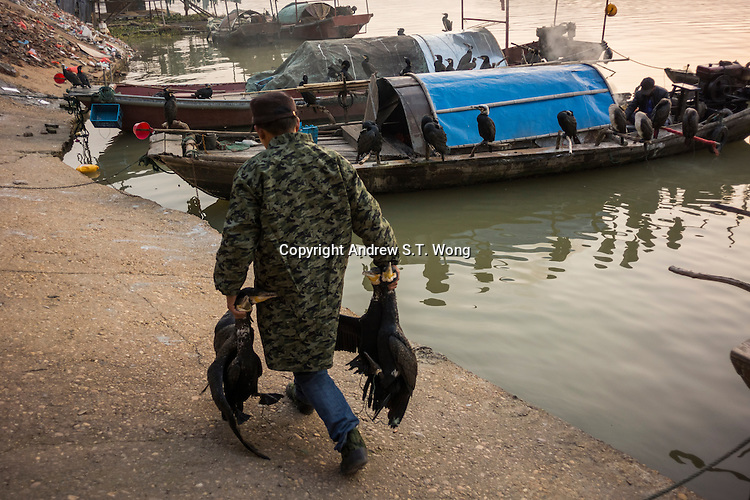 A fisherman prepares cormorants for fishing at dawn at Poyang Lake, Jiangxi Province, December 2014. Poyang Lake, located in the north of Jiangxi Province, is the largest freshwater lake in China. It fluctuates dramatically between wet and dry seasons, from 3,500 square kilometres down to about 200 square kilometres. The lake provides a habitat for half a million migratory birds.