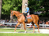 Nineteen-year-old John's Call leads the post parade for the John's Call overnight stakes